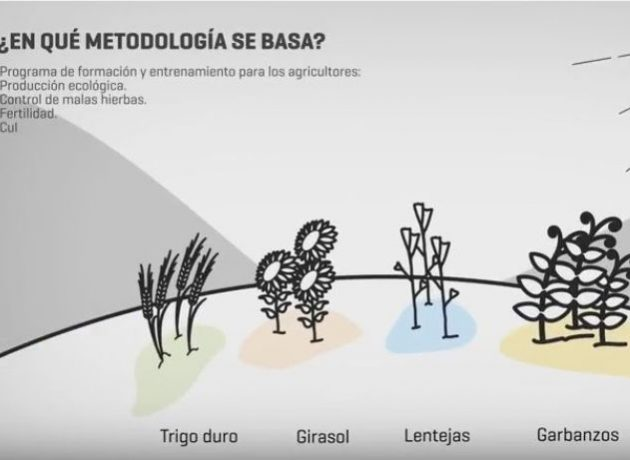 Video summary of LIFE Crops for Better Soil project