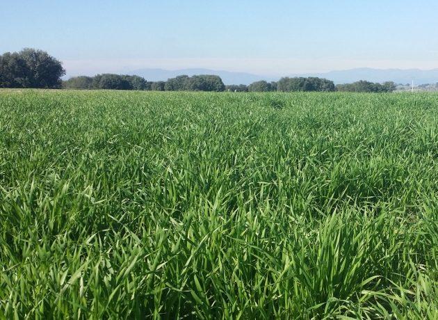 Cómo hacer rentable la agricultura ecológica en zonas de secano (Vídeo)