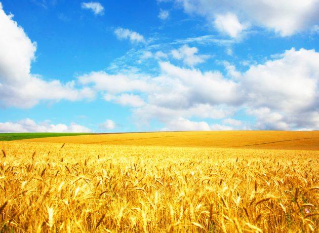 Cultivos Tradicionales demuestra que sí se pueden transformar tierras erosionadas en tierras productivas