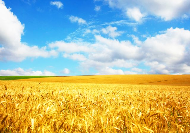Crops for Better Soil proves that degraded land can be regenerated