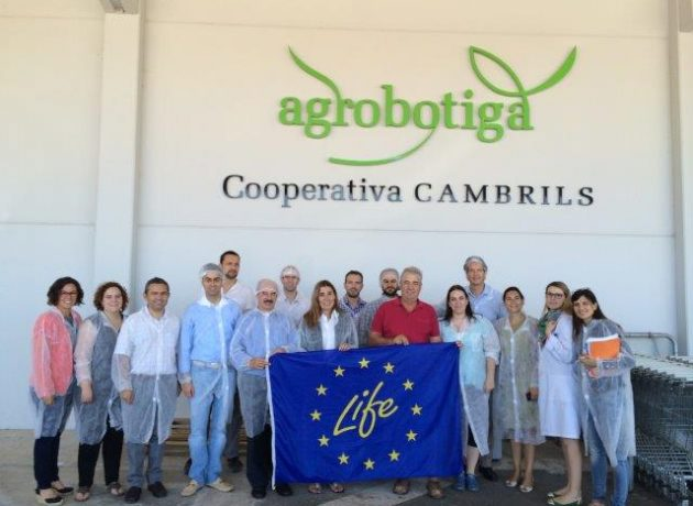 Current status of sorghum cultivation at the Cooperativa de Cambrils